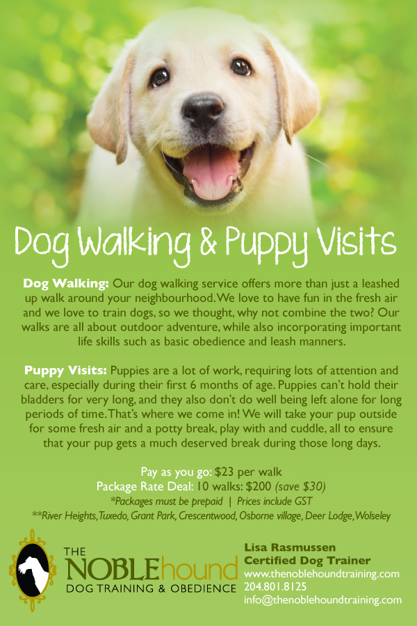 Dog Training Word Press Theme